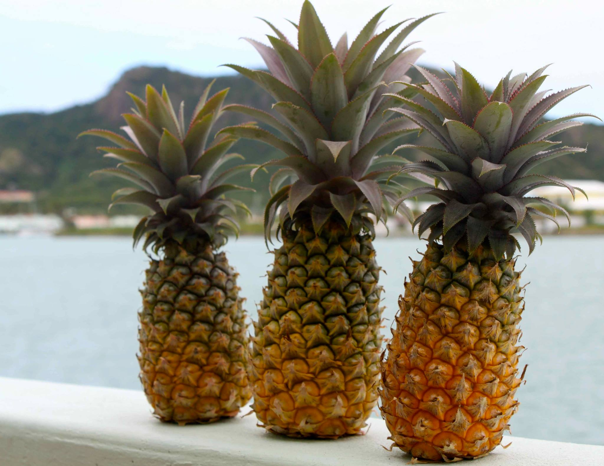 Take A Bite Into The Rare & Refreshing Antigua Black Pineapple