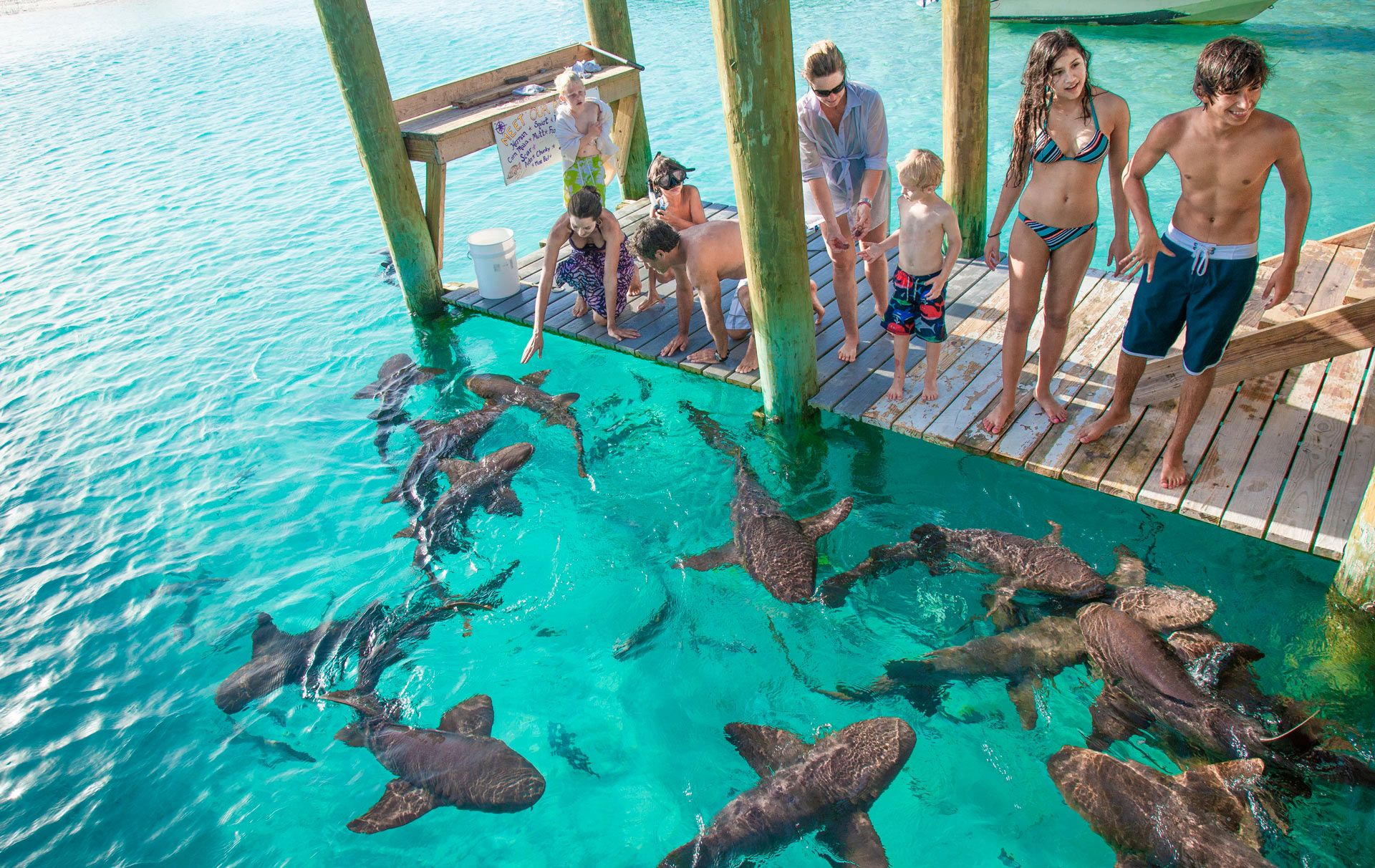 Feeding nurse sharks in Exuma