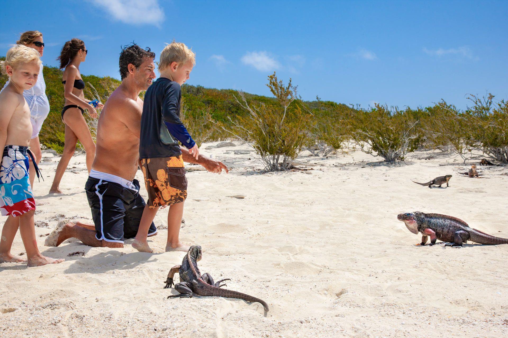 Bahamian rock iguanas