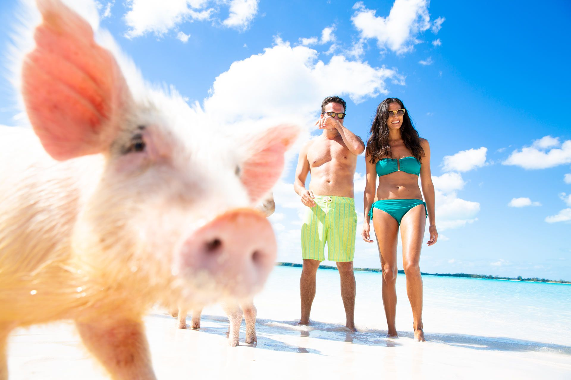 couple standing with swimming pigs