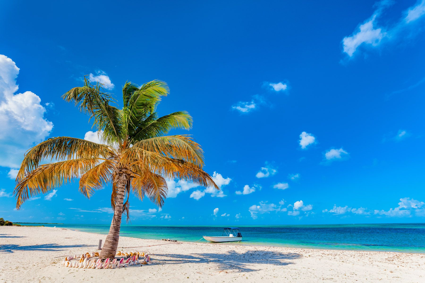Tropical beach on Barbuda Island