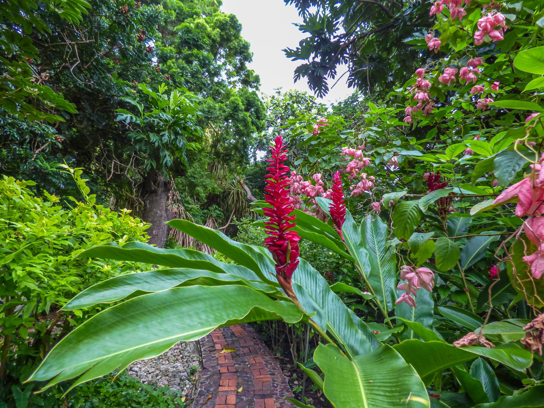 Andromedas Botanic Garden trail sorrounded by tropical flowers and trees