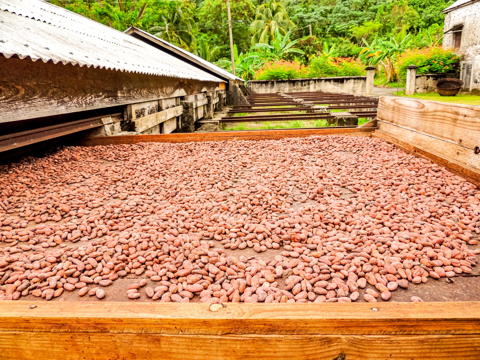Chocolate Production Grenada
