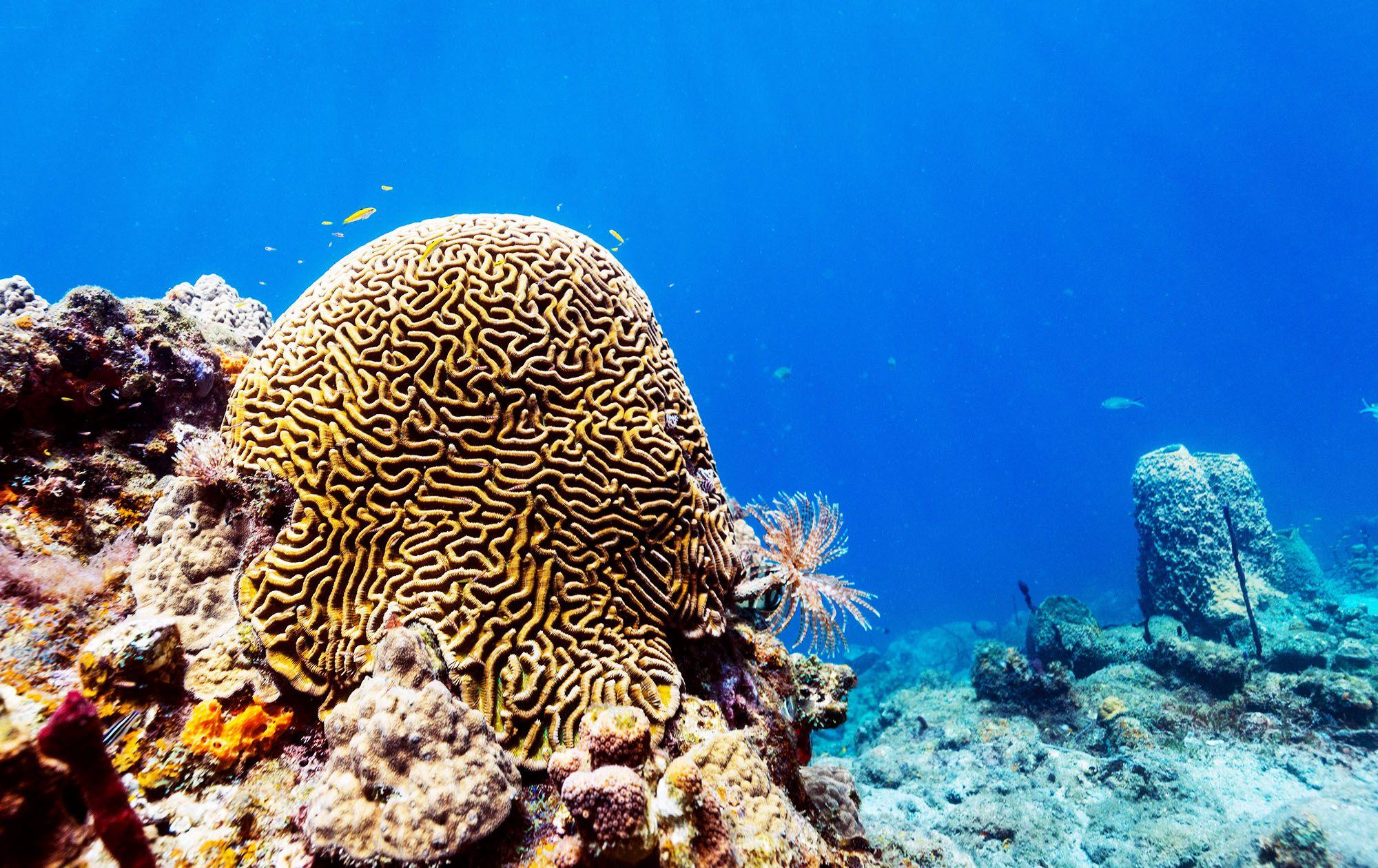 Virgin Cove Dive Saint Lucia