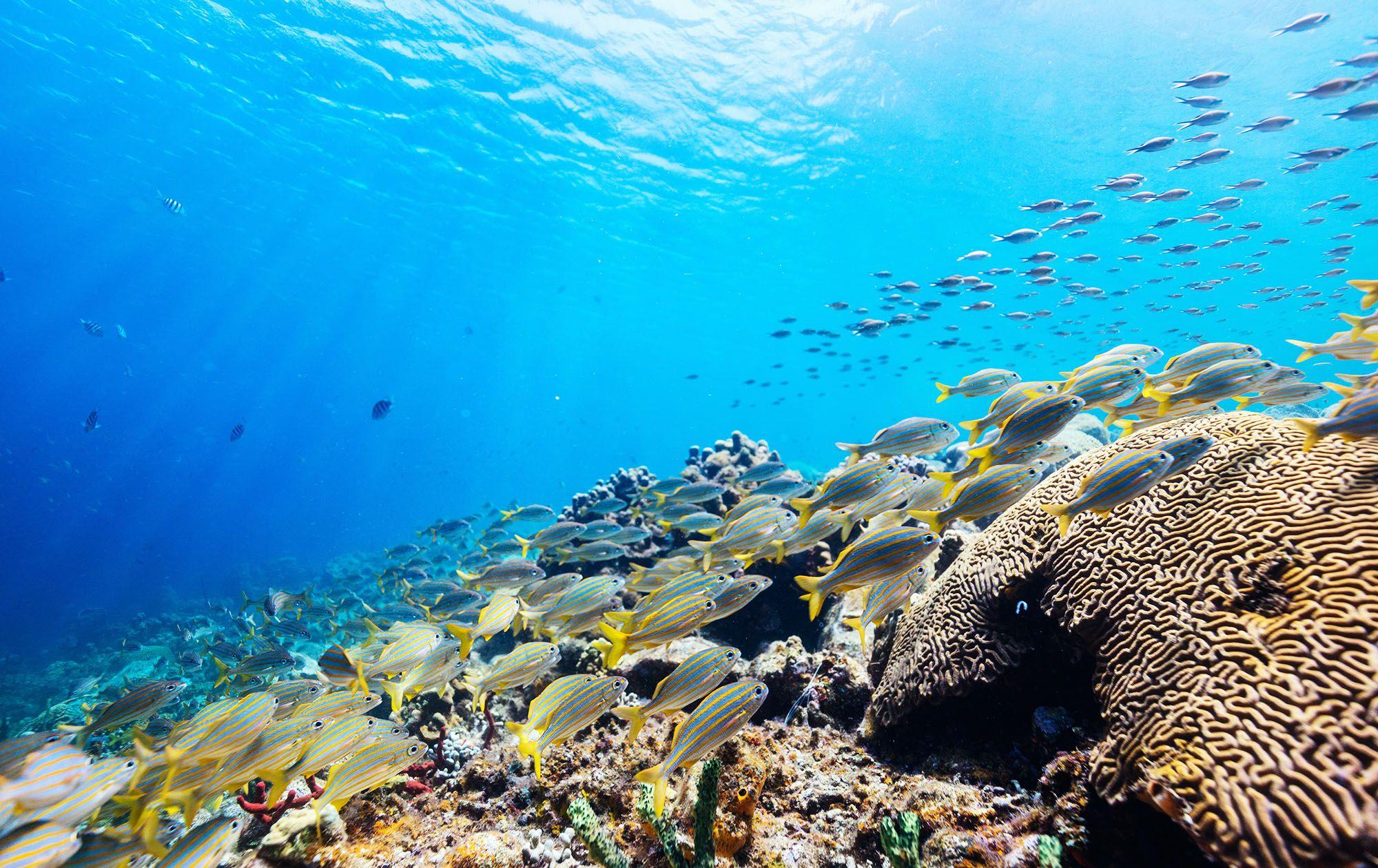 colorful fish bank scuba dive