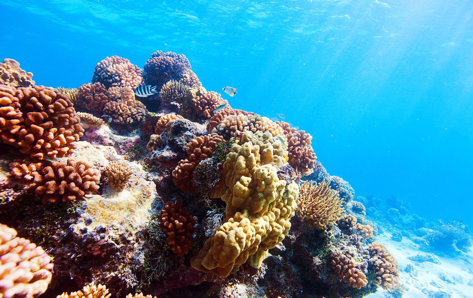 Coral Reef Scuba Dive Saint Lucia
