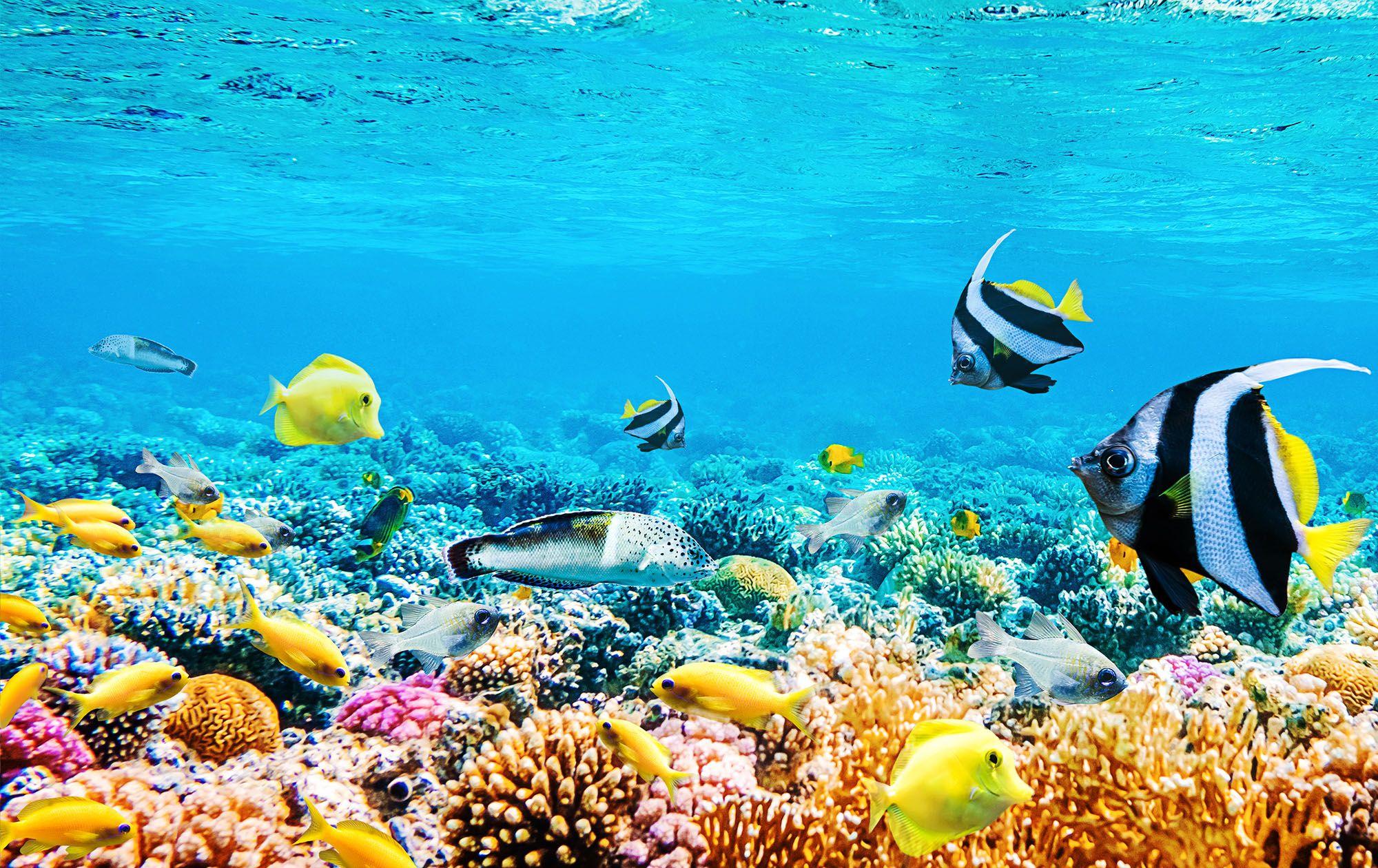 Colorful Coral Scuba Dive