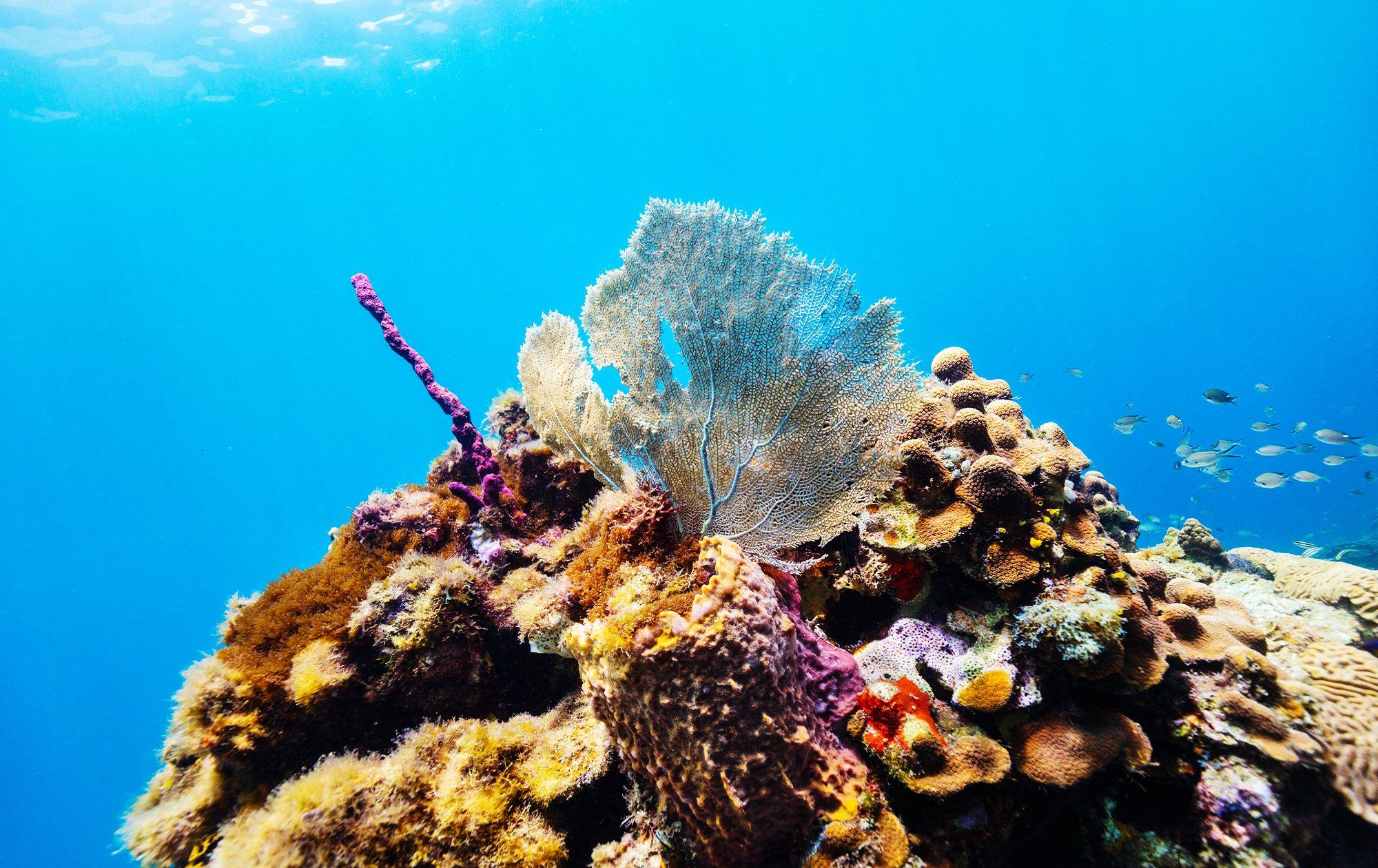 Saint Lucia Coral Reef