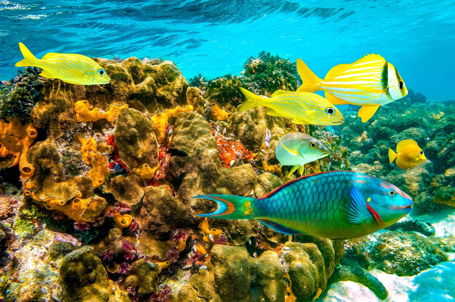 Scuba-Diving-Jamaica-Coral-Reef