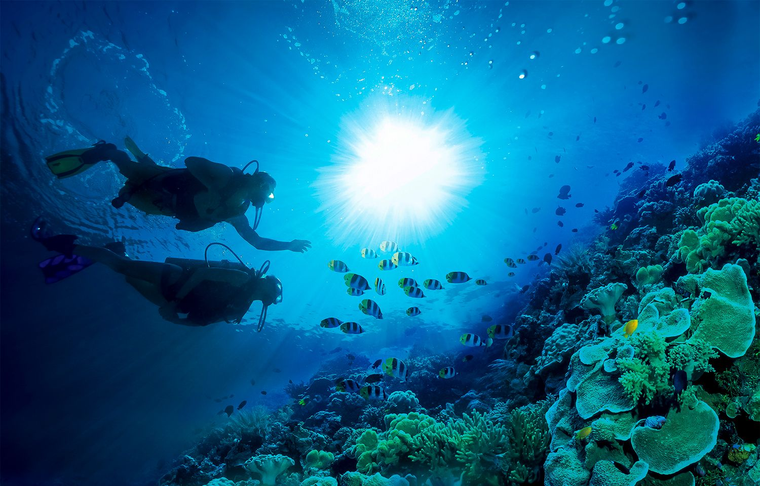 SeaLife-scuba-copy