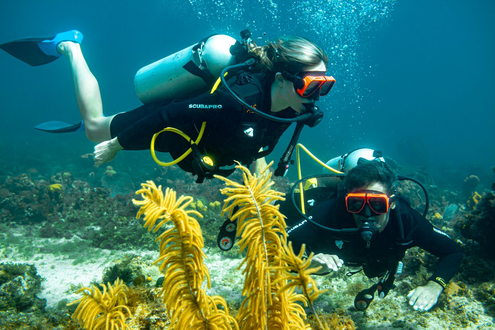 Scuba Diving In Grenada: What To Expect