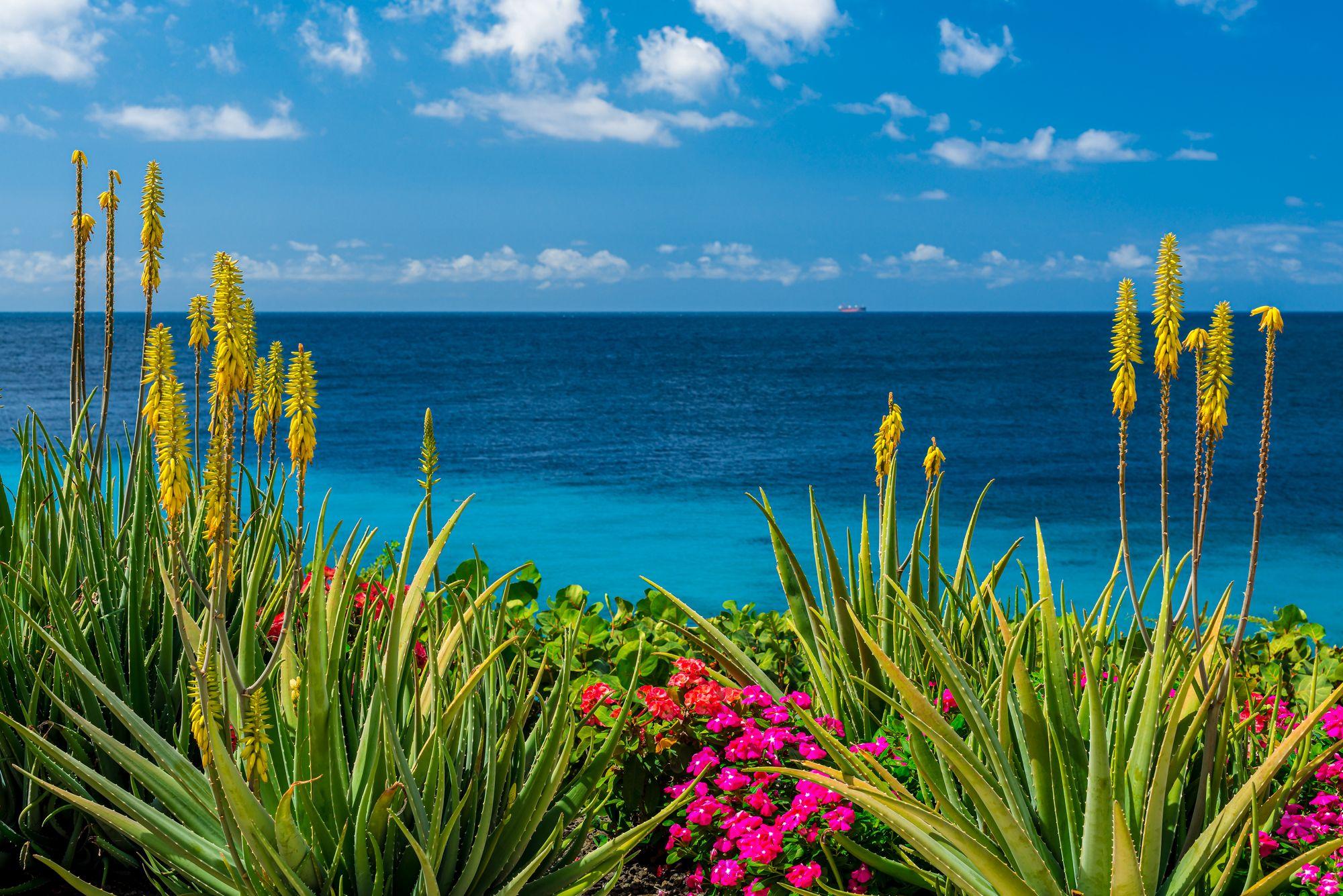 Curacao Aloe Vera Plantation